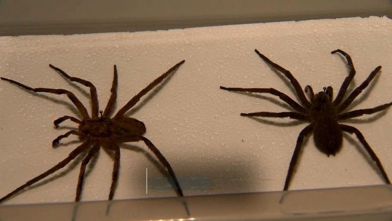 Acidentes com aranhas lideram lista de ocorrências envolvendo animais peçonhentos em Juiz de Fora em 2019