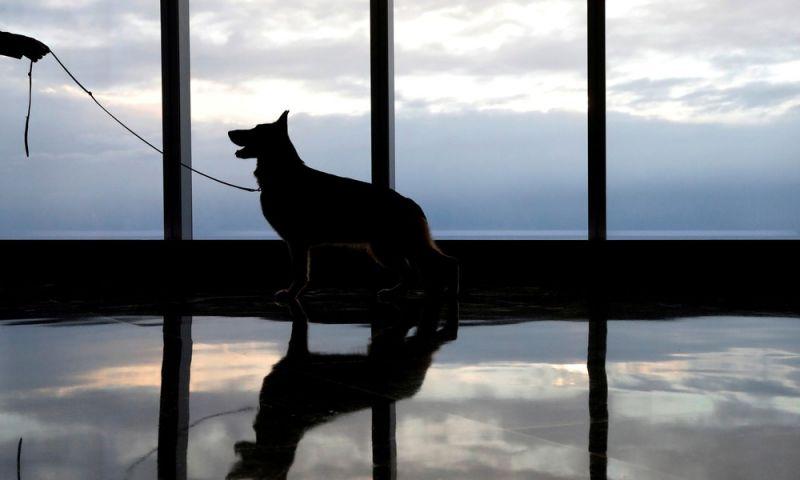 Universidade dos EUA aprova uso de cachorros em terapia intensiva