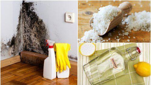 5 formas efetivas para se livrar da umidade de sua casa