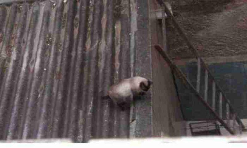 Dono de imóvel proíbe resgate de gato em seu telhado e cria polêmica com vizinhos