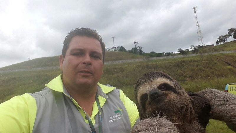 Bicho-preguiça 'faz selfie' com funcionário de concessionária de rodovia