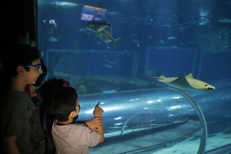 Crianças em tratamento contra o câncer têm dia especial no AquaRio