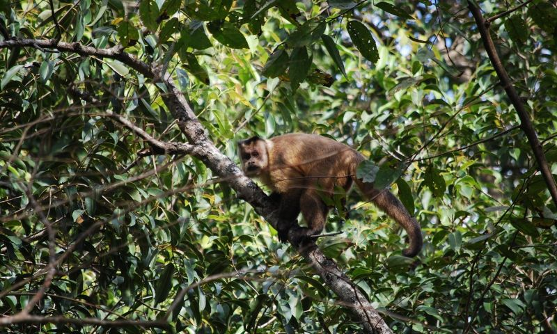 Plano para conservar 41 espécies no Cerrado e Pantanal é aprovado
