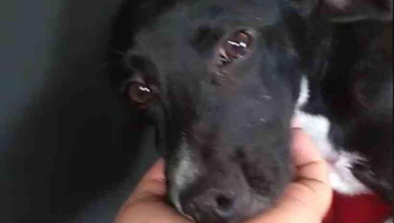 Mais de 50 cães são envenenados e mortos em lar temporário em Contagem, MG