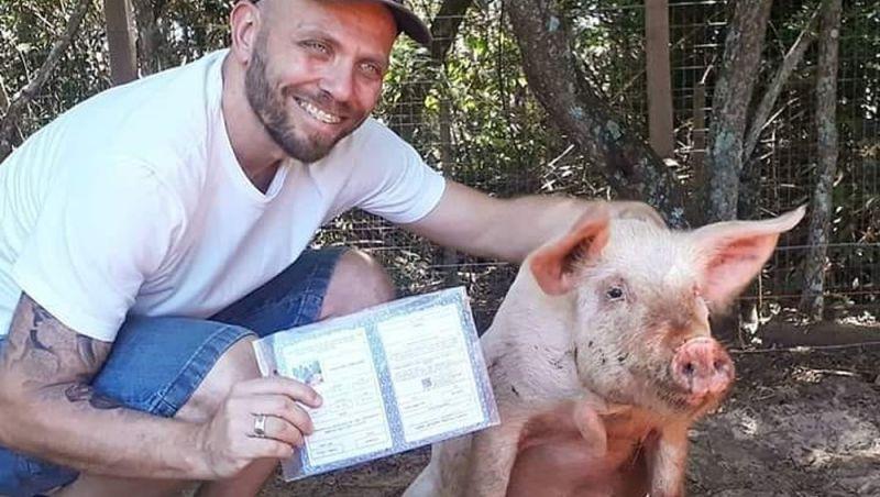 Porquinho achado na beira da estrada ganha documento de identidade