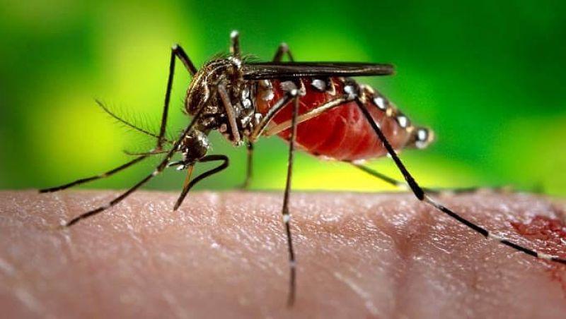 Marcador biológico facilita diagnóstico da dengue hemorrágica