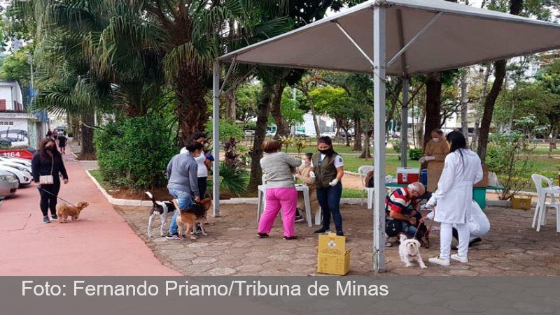 Juiz-foranos vão às ruas vacinar cães e gatos neste sábado