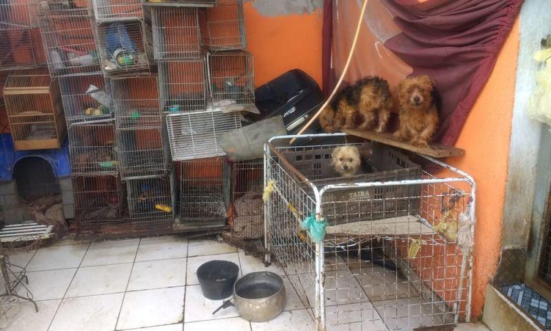 Polícia encontra mais de 100 cães e aves silvestres em casa na Zona Leste de SP