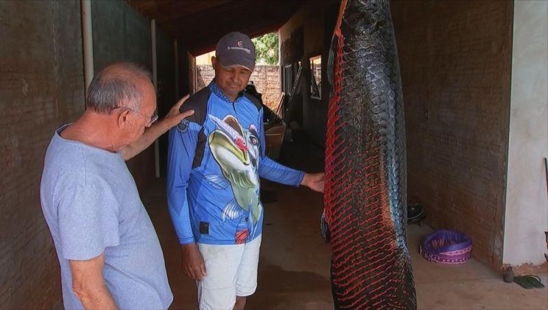 Pescador fisga peixe pirarucu de 110 quilos em Cardoso: 'Virou rotina'