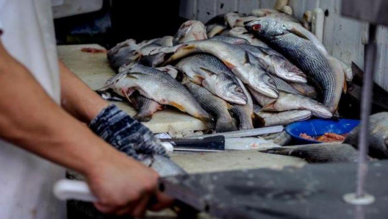 Pesquisa indica peixes que podem ser consumidos por brasileiros