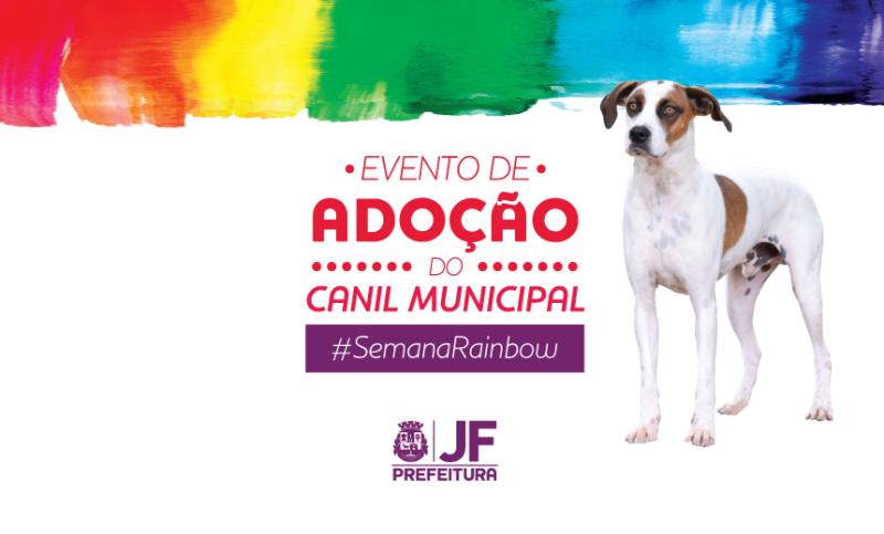 """""""Rainbow Fest"""" sedia adoção de animais do Canil Municipal de JF"""