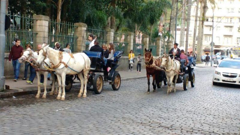 Petrópolis aguarda notificação que proíbe uso de cavalos em charretes