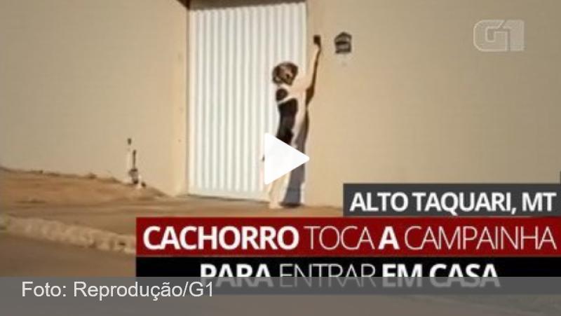 VÍDEO: Cão toca campainha para entrar em casa e surpreende donos em MT: 'Pensava que era um fantasma'