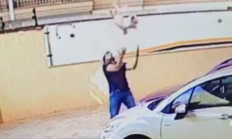 VÍDEO: Cão cai do 9º andar de prédio e é salvo por vizinho em SP