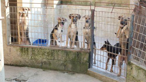 Dezembro é mês do combate ao abandono e maus-tratos de animais