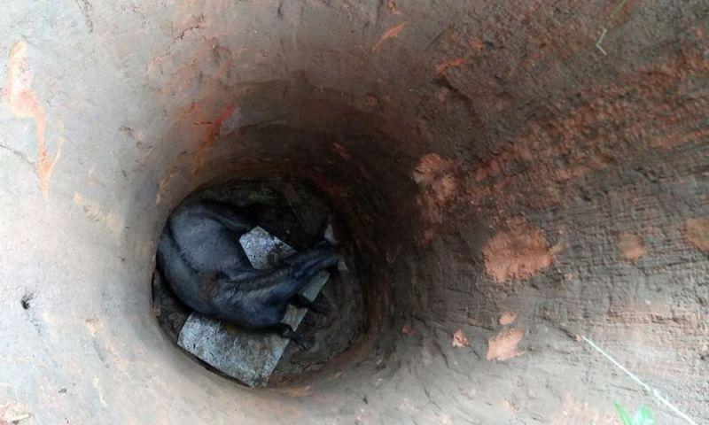 Bombeiros resgatam cavalo que caiu em poço de 8 metros de profundidade