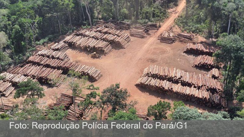 PF faz maior apreensão de madeira irregular da história do país