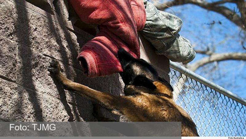MG: Rapaz mordido por cachorro será indenizado