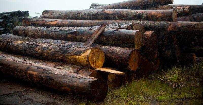 PF e Ibama deflagram operação contra extração ilegal de madeira amazônica