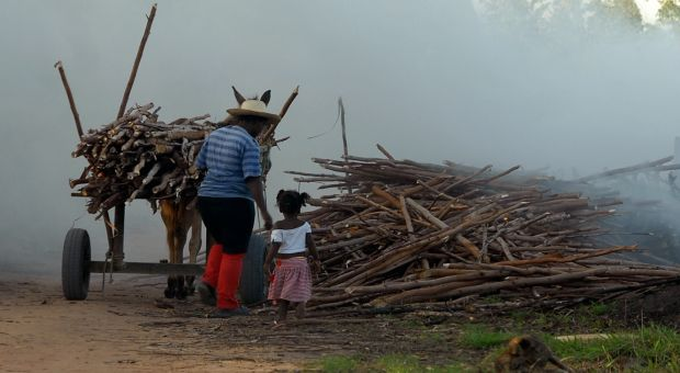 Brasil tem 30 mil crianças de 5 a 9 anos no mercado de trabalho