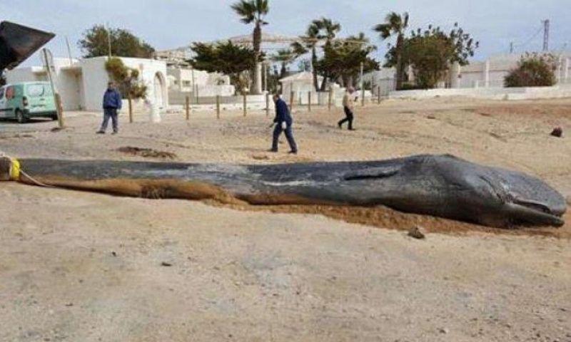 Baleia morre depois de ingerir 29 quilos de resíduos plásticos jogados no mar