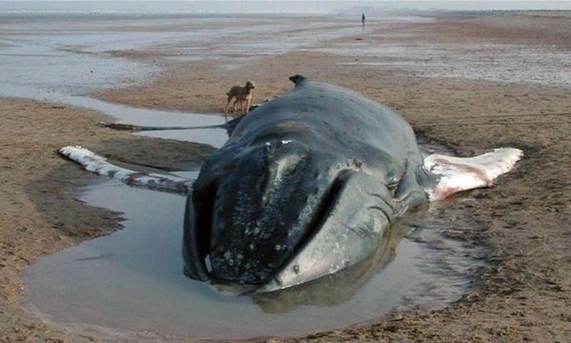 Os 'detetives' que tentam desvendar a morte de golfinhos