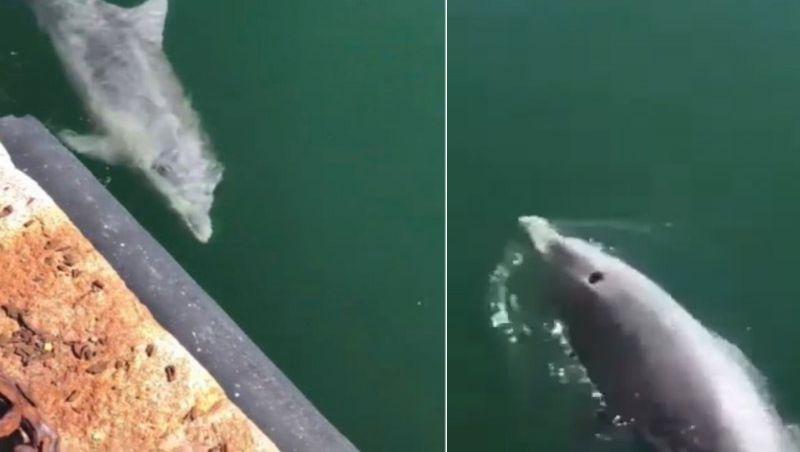 Golfinhos voltam a Veneza vazia durante quarentena; vídeo