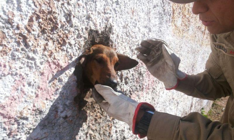 Bombeiros resgatam cão preso em muro de estádio em Ladário, MS