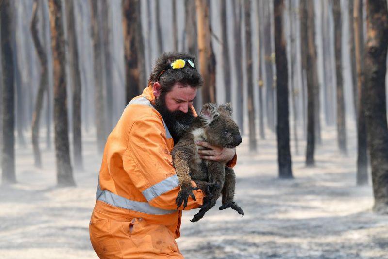 Incêndio na Austrália destruiu um terça da ilha Kangaroo, mostra Nasa