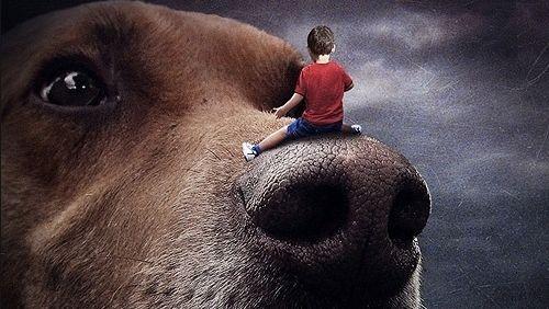 Fotógrafa cria imagens de sonho para ajudar adoção de animais