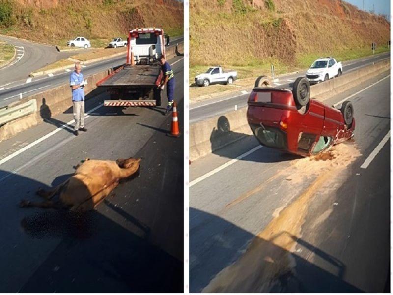 Carro capota ao colidir com cavalo na BR-040 próximo ao CEASA em Juiz de Fora
