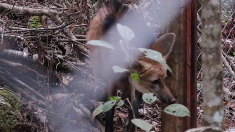 Projeto reabilita animais silvestres para soltura em Minas Gerais