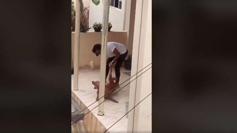 Polícia resgata cadela agredida por mulher em Belo Horizonte