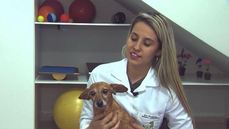 'TV Bicho': Em Juiz de Fora, conheça a história de Titio, cão que teve lesão na medula e voltou a andar