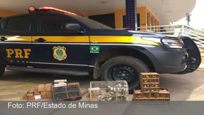 Vídeo mostra crueldade do tráfico de 150 pássaros de MG para o Rio de Janeiro