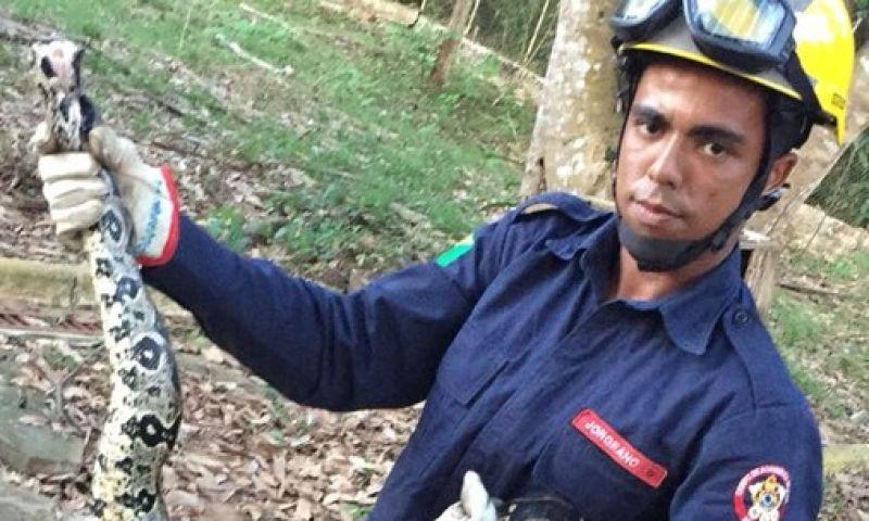 Jiboia de 3 metros é capturada pelos Bombeiros após comer galinhas em terreno de casa no AC
