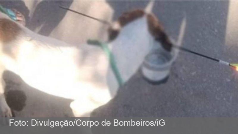 Cachorro é atingido por flecha e socorrido por vizinhos em MG