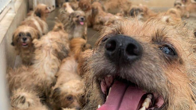 Polícia de SP resgata 66 cães em casa após denúncia; veja vídeo