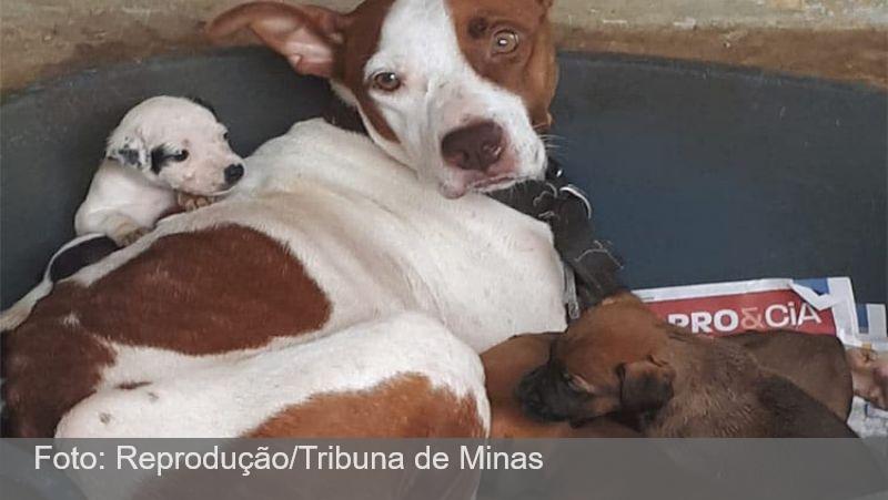 Ong de Juiz de Fora relata dificuldades com animais que ficaram 'órfãos' na pandemia
