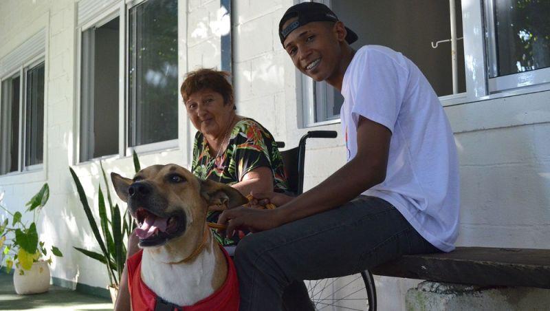 Resgatados das ruas, vira-latas são reabilitados e viram cães 'terapeutas'