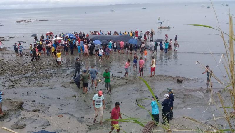 Moradores da BA pegam carne de baleia morta: 'Necessidade'