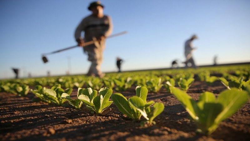 Exportações do agronegócio sobem 4,1% em março; saldo comercial é de R$ 7,79 bi