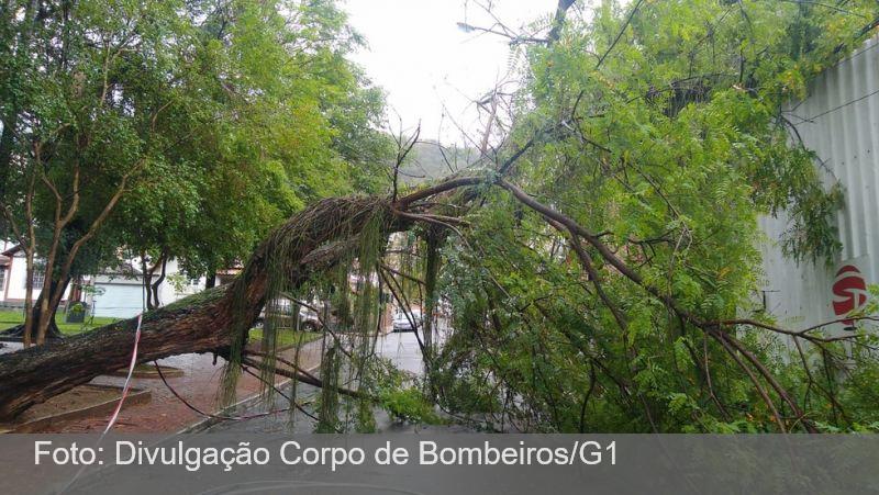 Queda de árvore interdita trânsito e deixa moradores sem energia elétrica no Jardim Glória em Juiz de Fora