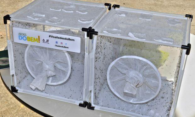 Prefeitura de Juiz de Fora inicia soltura de mosquitos modificados