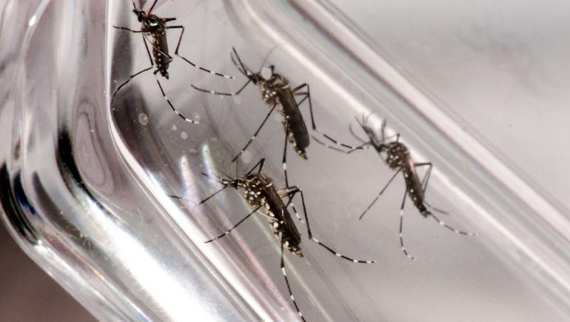 Novos casos prováveis de dengue são registrados em 10 cidades da Zona da Mata e Vertentes