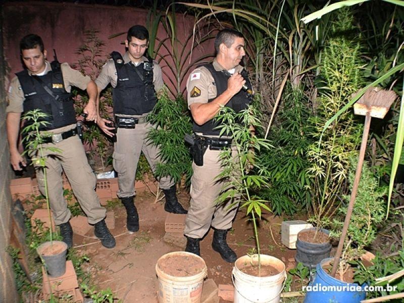 PM apreende plantação de maconha em residência de Muriaé