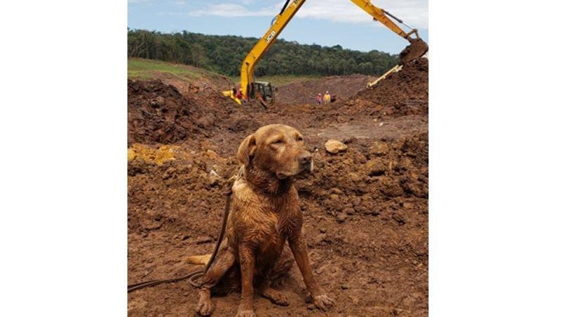 Exames indicam aumento de metais pesados em cães bombeiros que atuaram em Brumadinho