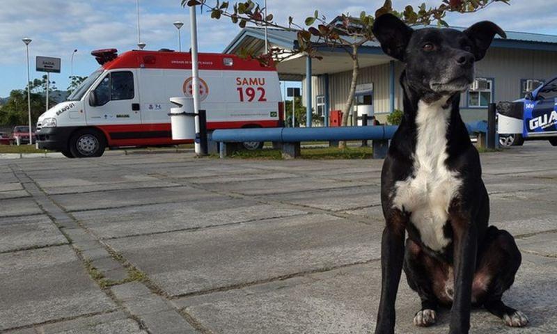 Após esperar mais de 2 anos pelo dono na frente de hospital, cachorro Negão morre atropelado em Balneário Camboriú