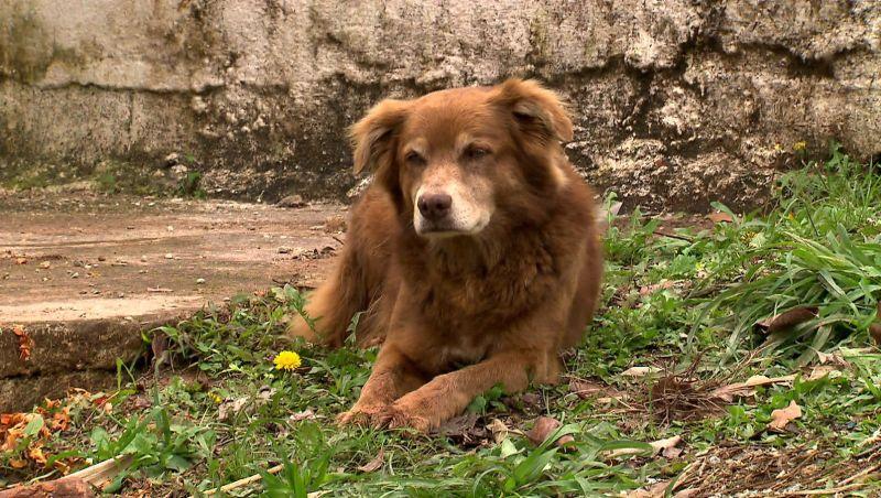 Cachorro mora em cemitério de Taboão da Serra há 10 anos após acompanhar enterro da dona