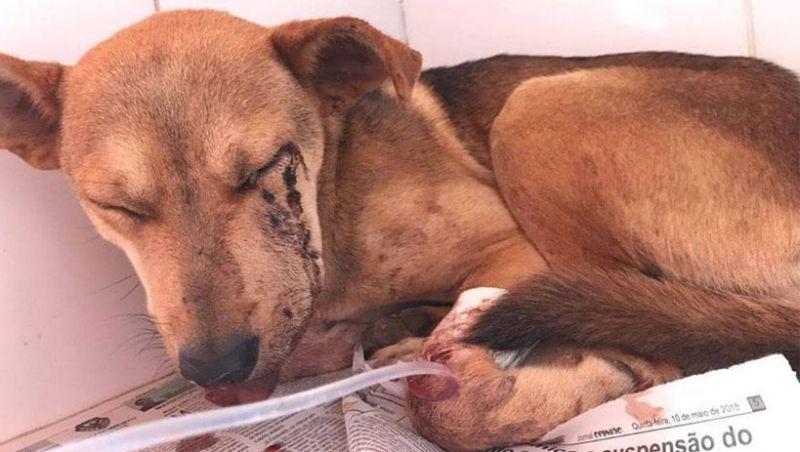 Dono de sítio é indiciado por atirar em cadela em Caeté, MG